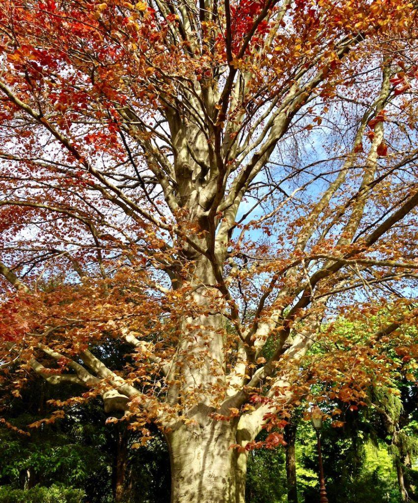 business coaching au pied d'un arbre