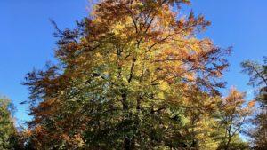 business coaching, au pied d'un arbre